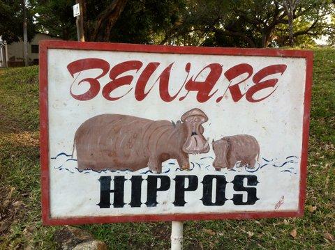 beware hippos