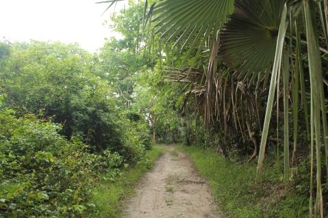 Abuko Natural Reserve